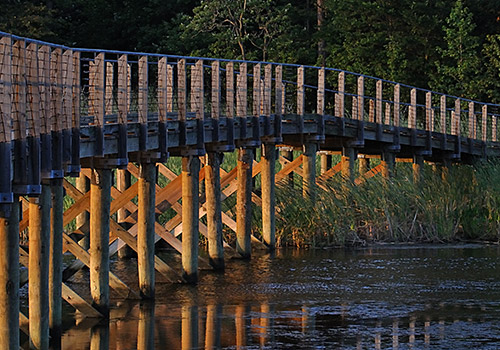 Bridge over water with cattails