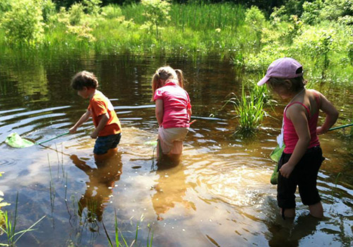 Three kids use nets to look for fish et al in shallow water
