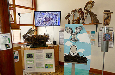Bird Corner display including bird box, osprey nest, mounted specimens, and TV