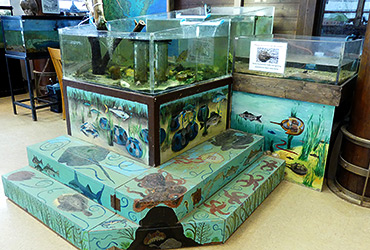 Touch tank with painted steps and walls around it