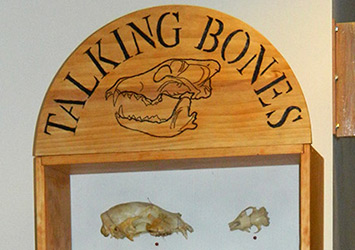 Top of Talking Bones display with two animal skulls